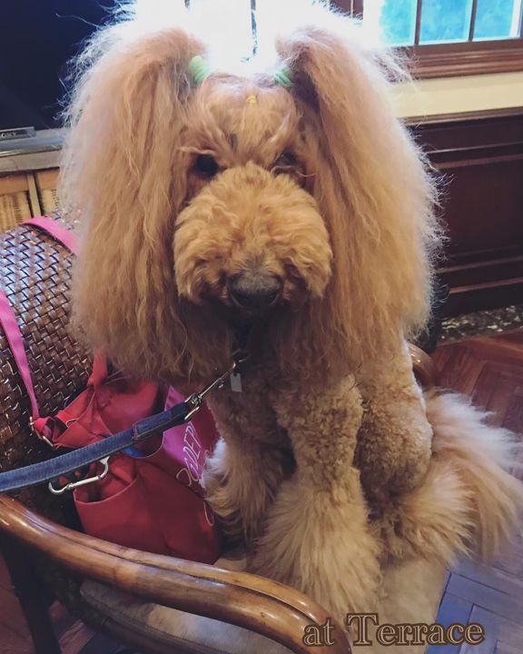 【at Terrace dog salon番外編⁈✨】