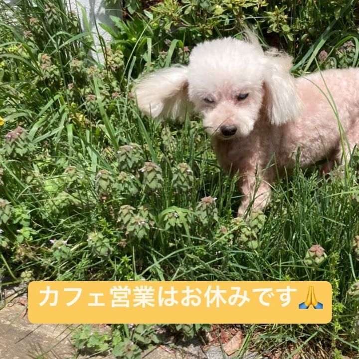 【atTerrace軽井沢ガーデンファーム カフェはお休みです】