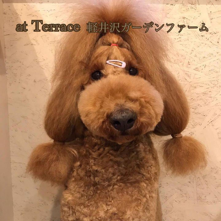 【10/16.17のアニマル・ドネーションフェスティバル イン