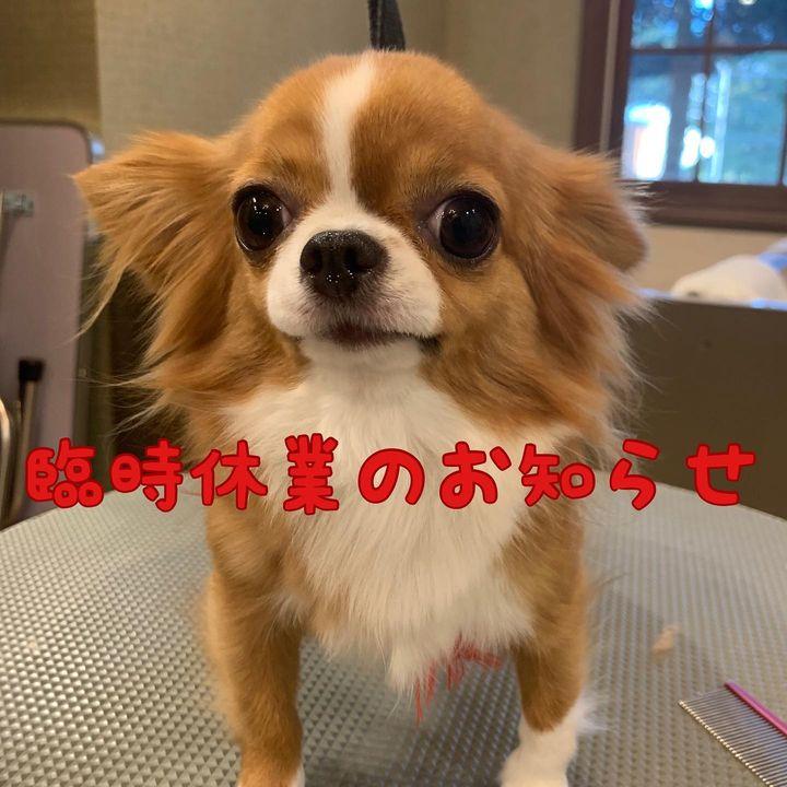 【10月15日(金曜日)dog shop臨時休業についてお知らせ🙇♀️】